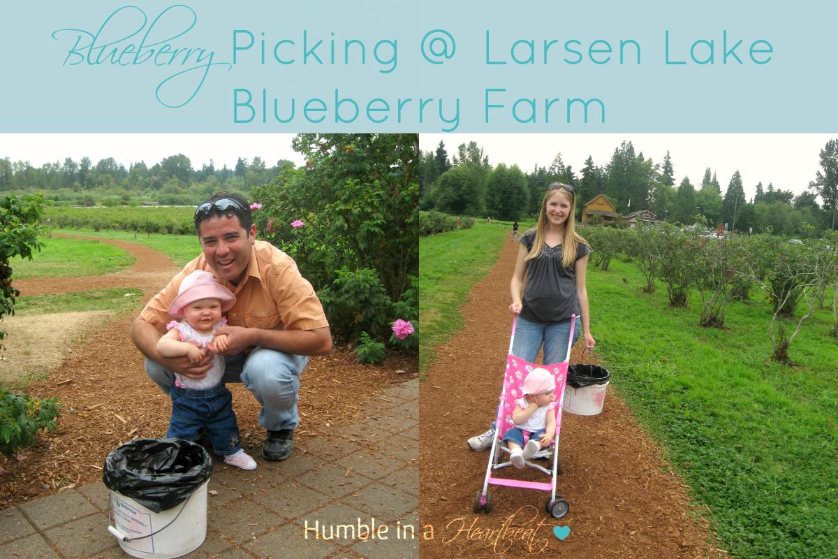 Blueberry Picking @ Larsen Lake Blueberry Farm